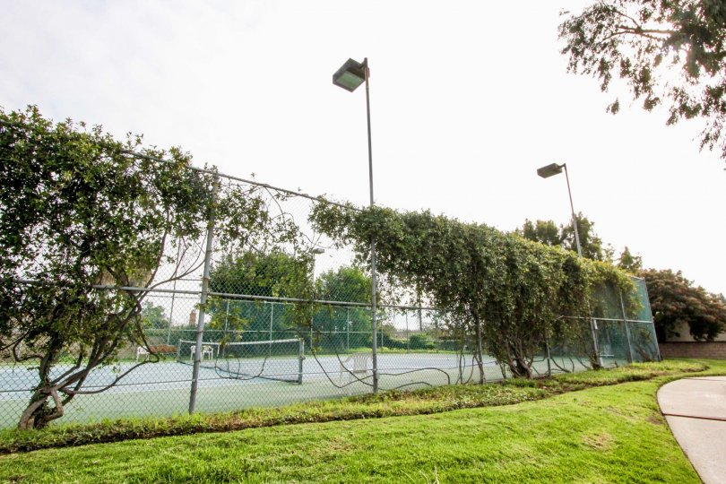 Fence of the tennis court is covered with bushes with light lamps and lawn in Stone Pine Estates
