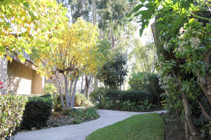 Sunny Ridge Townhomes Fullerton California like garden house fully covered with colored plants