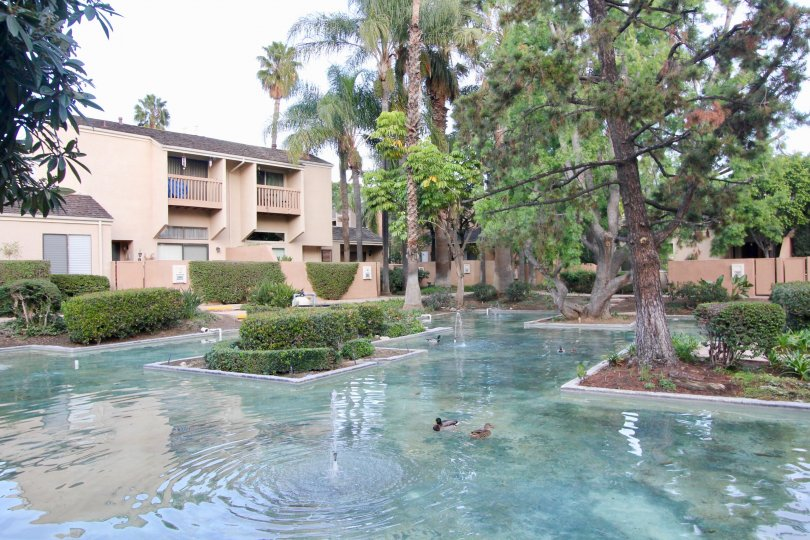 Water Gardens Fullerton California short buildings with tall trees and floor path filled with clean water