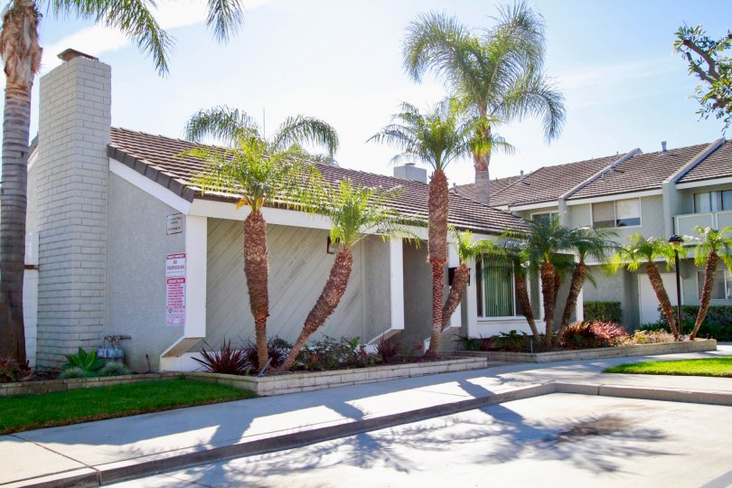 Cherrywood Village Huntington Beach California carrot shaped trunked palm trees beautiful