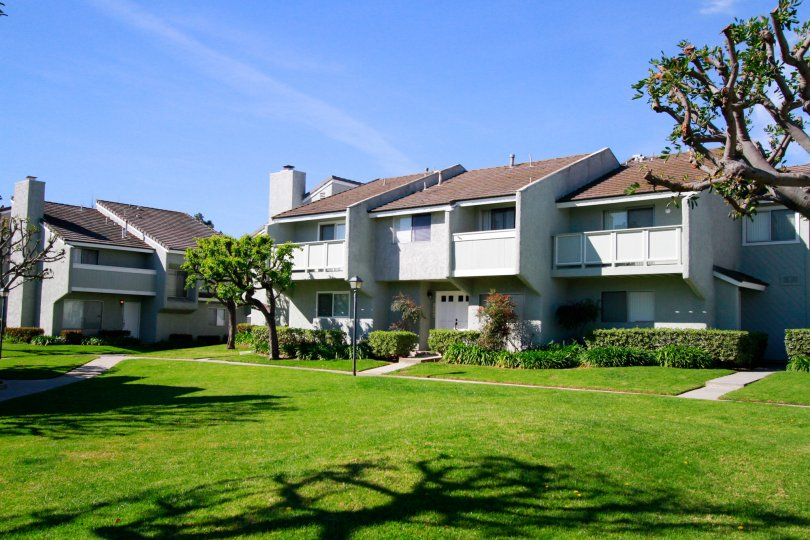 The white color buildings in the Cherrywood Village with glass windows, big trees, green grass and ornamental shrubs.