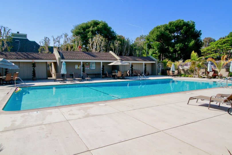 the traditional look holding swimmnig pool with the trees are locate in christiana bay of huntington beach of california