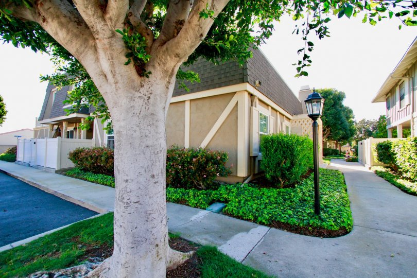 a large tree stands in the community of Gables in Huntington beach California