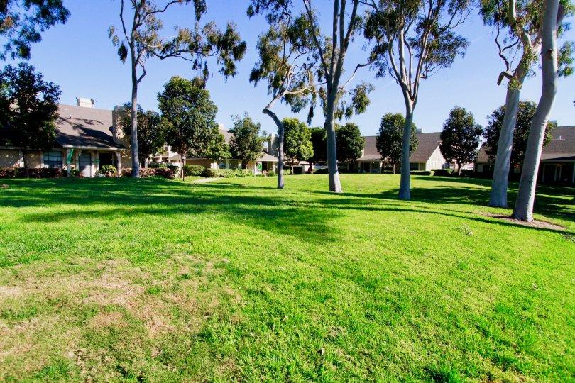 Gables Huntington Beach California tiny house hidden by huge plants and bush