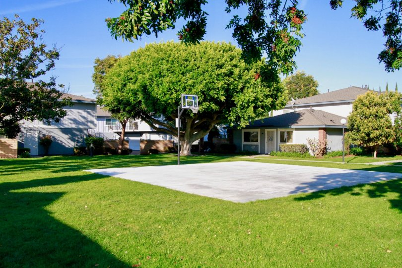 Nice green lawn with Baskeball court in Harbor Heights Villas of Huntington Beach
