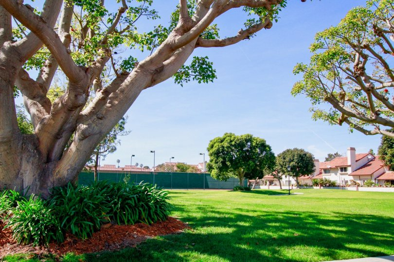 La Cuesta By the Sea lawn with trees and other plants on a sunny day.