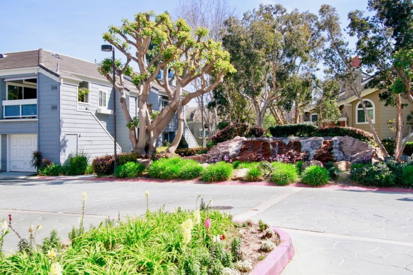 Pacific Ranch Townhomes street with trees and a stone wall on a sunny day.