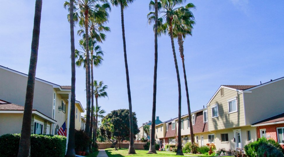 Surfside homes with a sidewalk and palm trees on a sunny day.