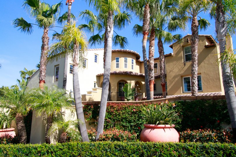 A tan-yellow stucco building surrounded by palm tree and shrub landscaping with a pink pot of flowers.