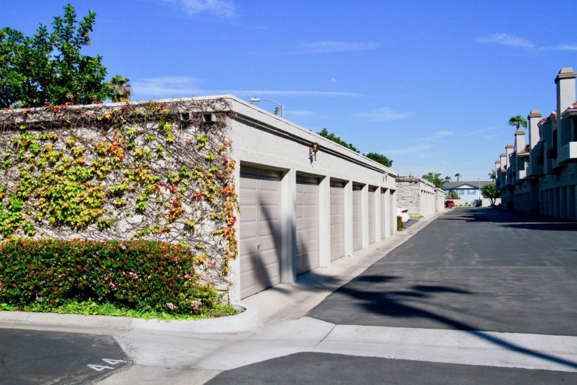 A sunny day at Tiara De La Pacifica Townhomes in Huntington Beach with vines growing on the garage wall