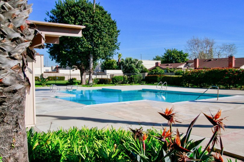 Excellent looking swimming pool with trees and garden in Villa Pacifica of Huntington Beach