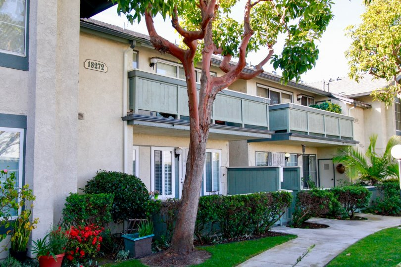 thw windward cove have a lovely home with a old and strong tree which is in huntington beach california