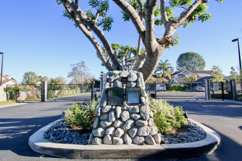This massive cedar is a significant component of the cemetery landscape. It is a clean and clam place where you can visit to get peace.