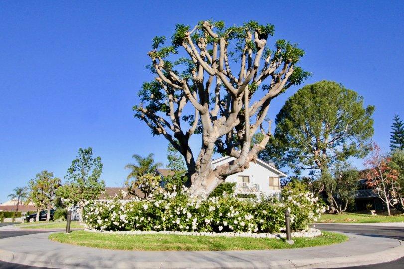 Nice trees and park around villas in Arborlake of Irvine