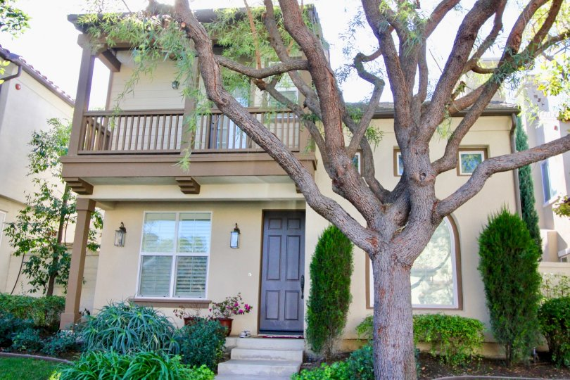 A tall and wild tree sits in front of a two story town home inside Casalon located in Irvine CA