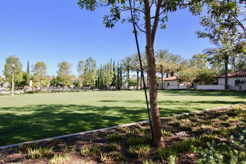 Fabulous view of lawn and trees near villas in Coronado of Irvine