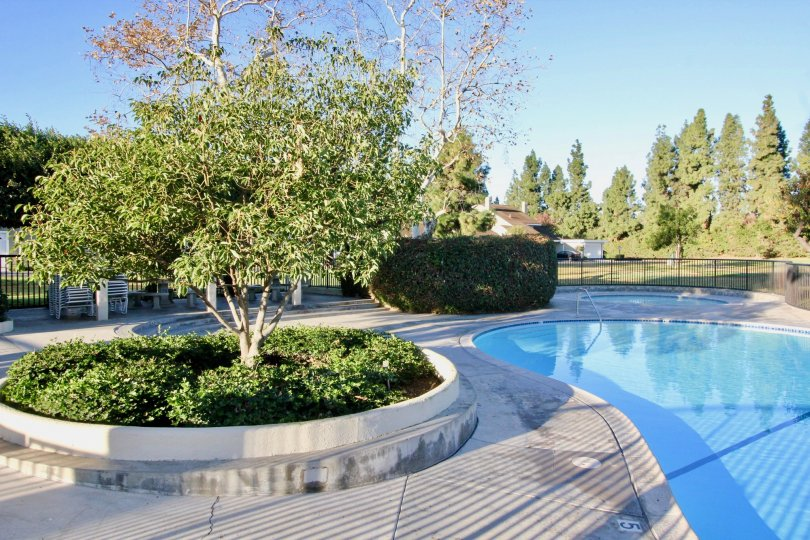 Swimming Pool is placed near the bushes and plants with seating benches in Park Homes