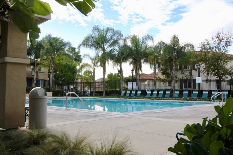 Relaxing palm trees and pool in the Parklane community