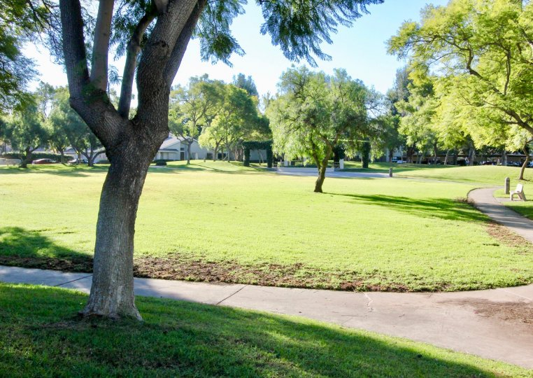 a warm day in the parkside with a park that has garden around in green