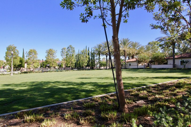 Nice park with lawn and trees having sunshine near villas in Santa Rosa of Irvine