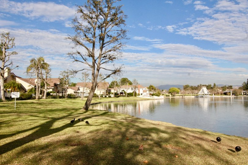 Fabulous view of a lake near villas with trees and lawn in Seaport of Irvine