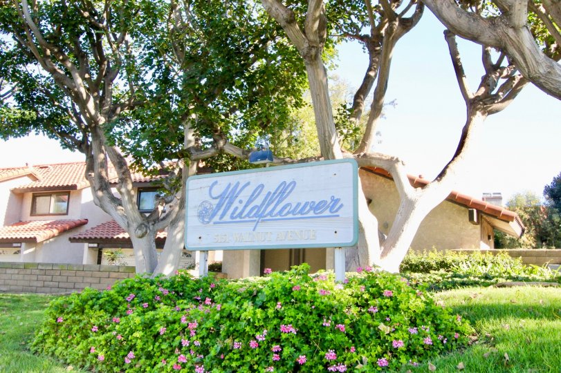 A sunny day in the area of Wildflower. welcome sign, condo, flowers, trees, grass, window
