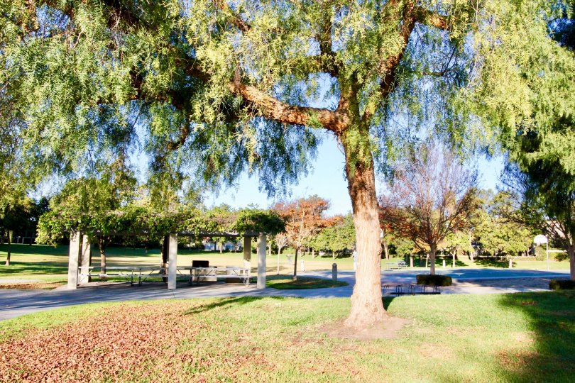 A sunny day in park at Woodbridge estates with a covered picnic table area and basketball court