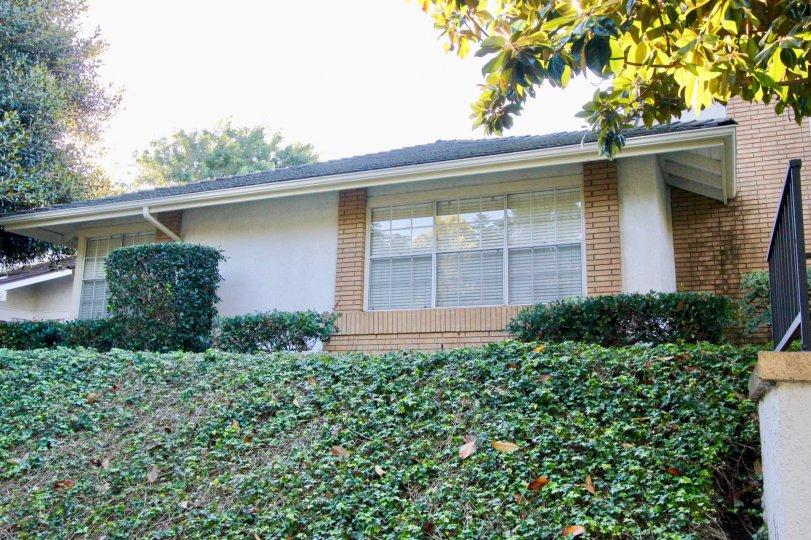 White and brick home in Woodbridge estates in irvine california manicured lawns.