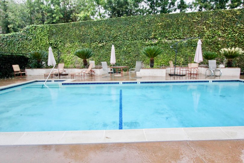 Back to the Swimming pool in La Habra Woods Townhomes is covered with dense bushes like a wall