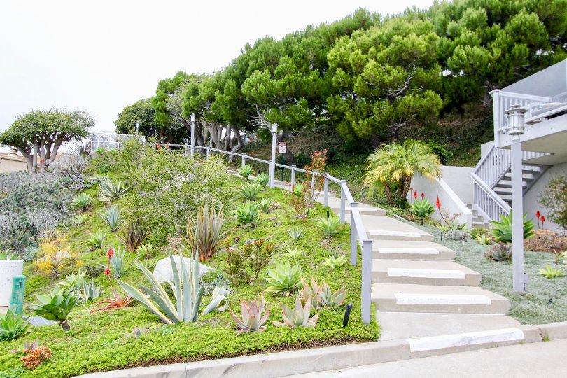 Lovely Aliso Laguna In Laguna Beach California Country