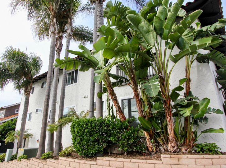 Nice Palm and Banana trees near a villa in Woods Cove of Laguna Beach