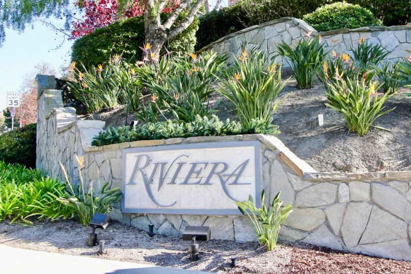 beautiful sunny day green plants Rivira sign in Riviera