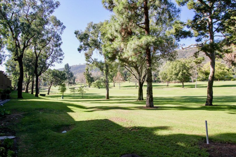 The green fairway lined with pines at the The East Nine in Laguna Niguel, California
