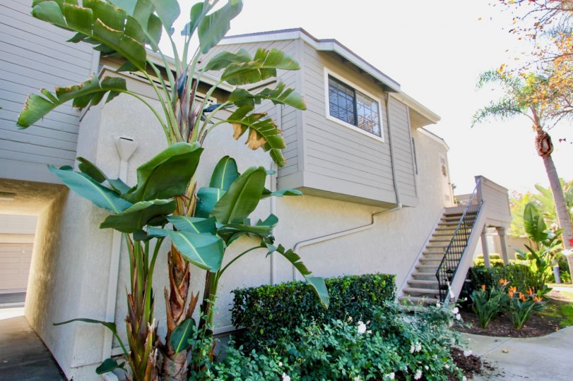 Nice Banana trees and steps with garden near villa of Village Niguel Terrace I Laguna Niguel