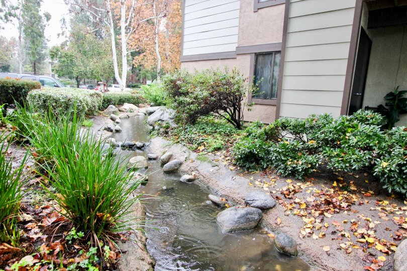 Brush and stream in Pheasant Creek in Lake Forest, CA