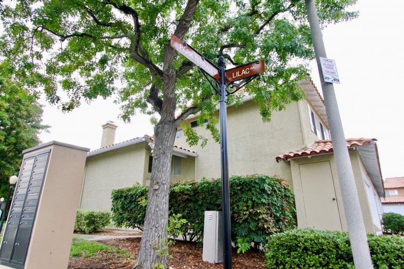 Tall neem tree with street light and post box in Emerald Pointe I.