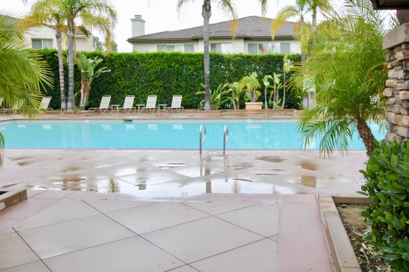 The swimming pool with tropical landscaping with palms at Magdalena in Mission Viejo, California
