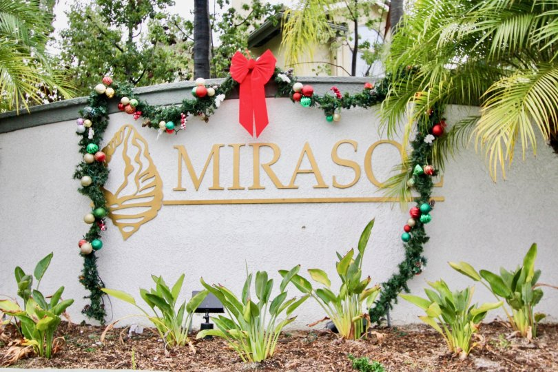 Indoor plants with ribbon decoration and trees in Mirasol.