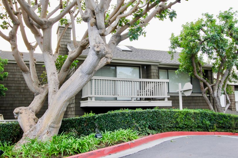 Side walk way view with trees of Big Canyon McLain, Newport Beach, CA