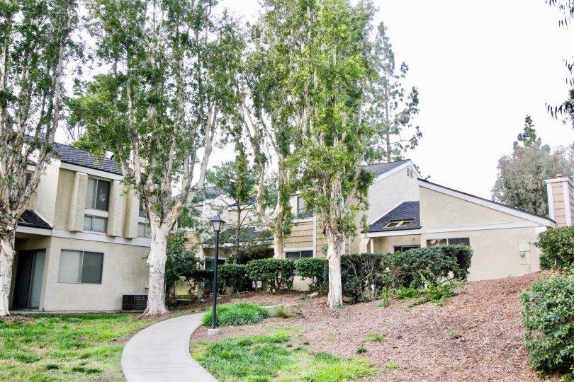 A bright overcast day in Arroyo Santiago Orange California