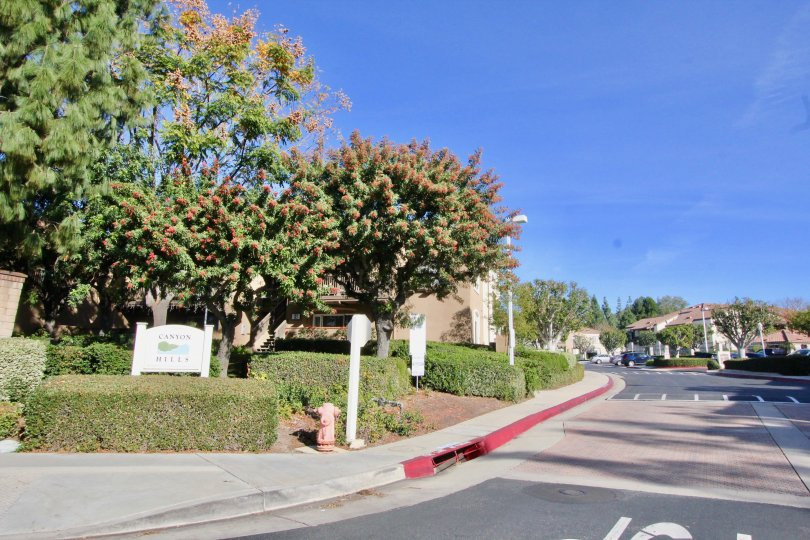 The street in Canyon hills is very clean and very bright with peaceful area and homes with trees and plants.