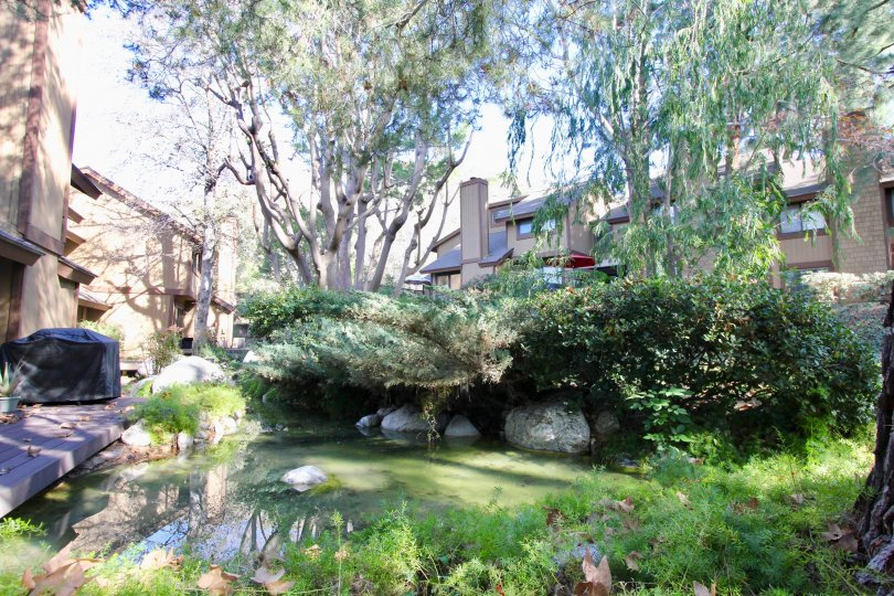 A large pond with flowing water and lots of jungle plants at Chapman Townhomes in Orange CA