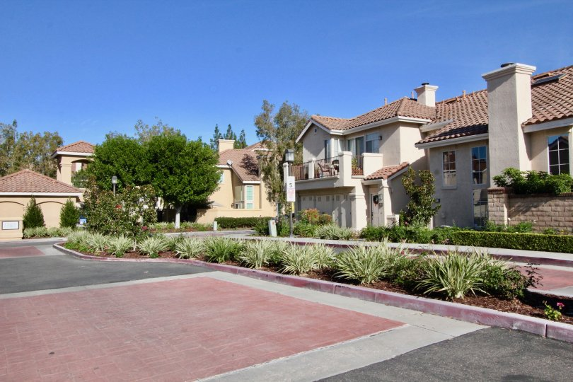 A sunny day in the Montevista community road with plants