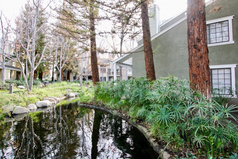 A home in morningside on the lake is very elegant city in california with canal, trees, plants and lakes.