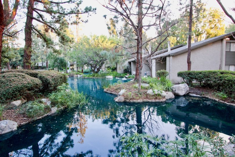 A gorgeous blue pond with a center island at Orange Lakes in Orange CA