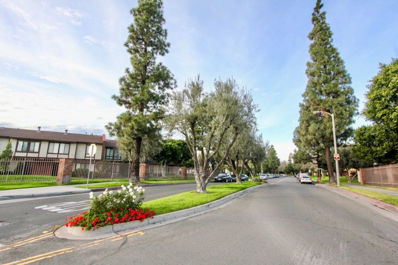 Tall green trees on the side of the road in Smoketree Orange Townhomes Orange, CA