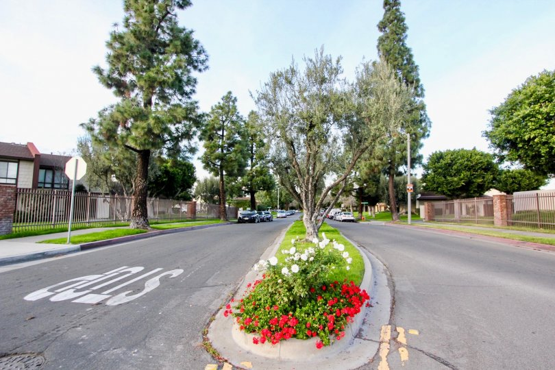 Amazing beautiful scenery of Smoketree Orange Townhomes community, San Francisco, California