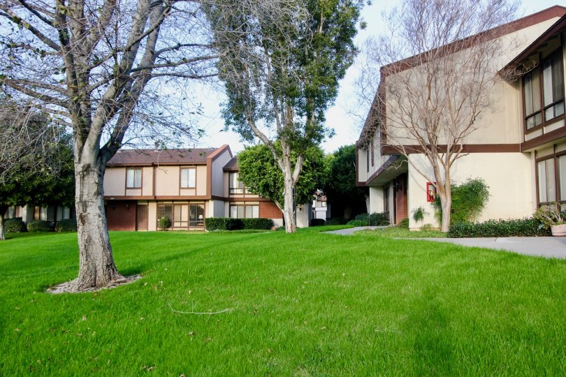 Some puffy green grass behind townhouses in Smoketree Orange Townhomes Orange California.
