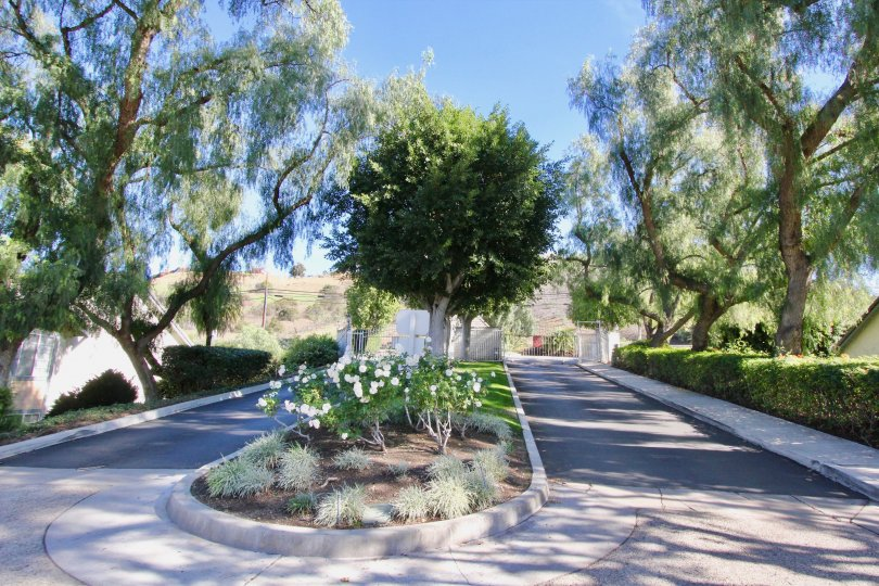An empty road through a garden with large trees in the Stonehenge community in orange city