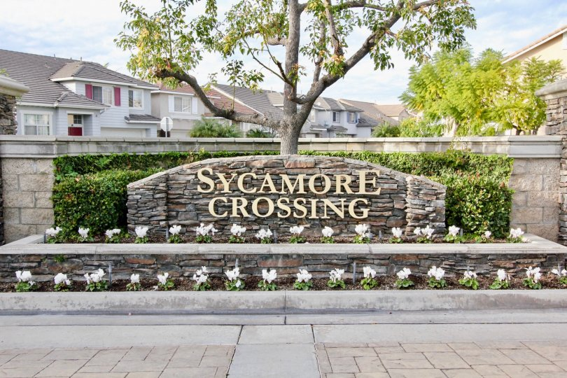 Tidy garden on a sunny day at Sycamore Crossing in Orange California.